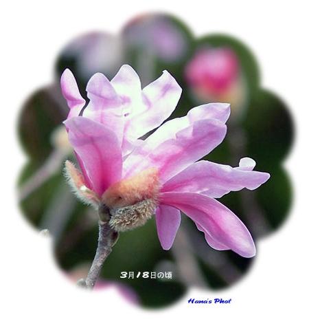 Photo_20200725213101
